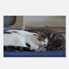 Cute Calico Postcards (Package of 8)