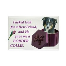 Border Collie (Tri) Rectangle Magnet (100 pack)