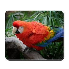 Scarlet Macaw Mousepad