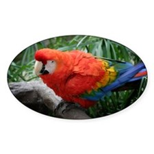 Scarlet Macaw Decal