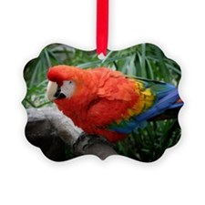 Scarlet Macaw Ornament