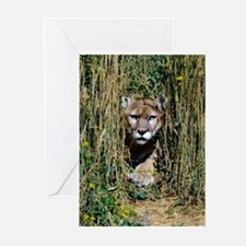 Lunch? Greeting Cards (Pk of 10)