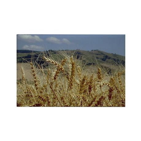 Palouse Wheat Rectangle Magnet
