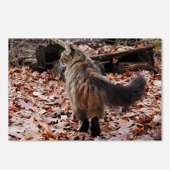 Maine Coon cat boots Postcards (Package of 8)