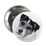 Jack (Parson) Russell Terrier Button
