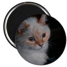 White Longhaired Cat: Kikoe Magnet
