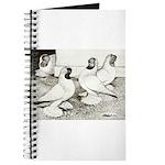 Moorhead Tumbler Pigeons Journal