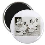 Moorhead Tumbler Pigeons Magnet