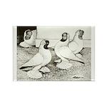 Moorhead Tumbler Pigeons Rectangle Magnet