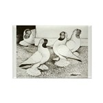 Moorhead Tumbler Pigeons Rectangle Magnet (10 pack