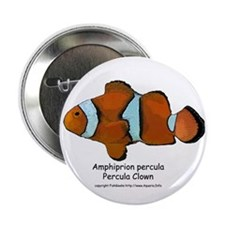 Percula Clown Button