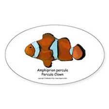 Percula Clown Oval Decal