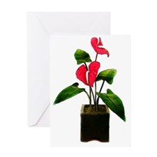 Red Anthurium in Planter Greeting Card