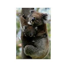 Australian Koala Mother and Baby Rectangle Magnet