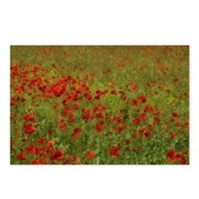 Poppy Landscape Postcards (Package of 8)
