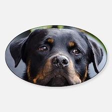 Rottweiler Dog Decal