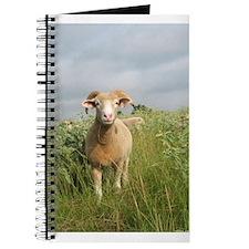 Ewe in the tall grass Journal
