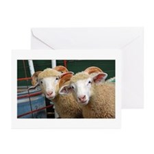 Inquisitive Ewes Greeting Cards (Pk of 10)