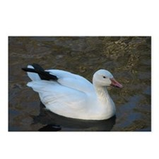 snow geese Postcards (Package of 8)