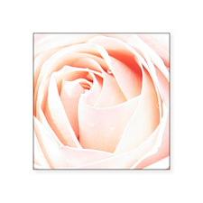 "Peach rose photography Square Sticker 3"" x 3"""