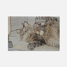 Cute Maine Coon cat Rectangle Magnet