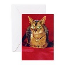 AbbyCat Greeting Cards