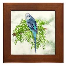 Blue Budgie on Green Framed Tile