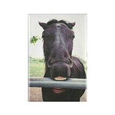 Having a Bad Horse Day - Rectangle Magnet (10 pac