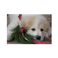 Pyr Pup -- Rectangle Magnet