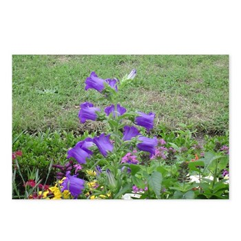 these purple flowers look like little bells they were growing in a garden in Wurzberg Germany.