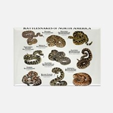 Rattlesnakes of North America Rectangle Magnet