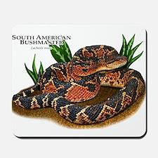 South American Bushmaster Mousepad