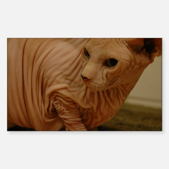 hairless lover kitten Rectangle Decal