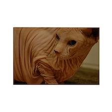 hairless sphynx cat Rectangle Magnet
