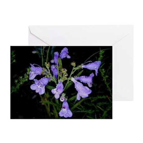 Greeting Cards (6) : Bluebell Rain