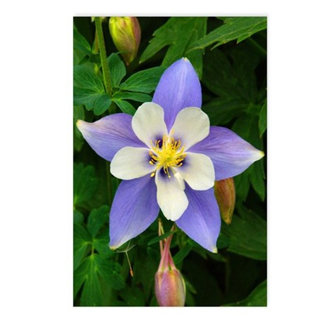 Postcards (8) Single Columbine