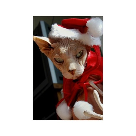 Holiday Hairless Cat Rectangle Magnet (10 pack)