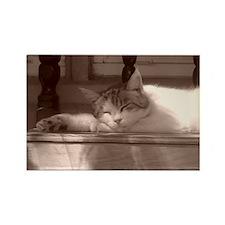 Sleepy Kitty Rectangle Magnet