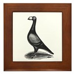 English Carrier Pigeon Framed Tile