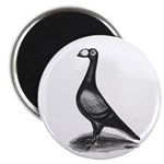 English Carrier Pigeon Magnet