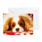 Cavalier king charles spaniel holiday Greeting Cards (20 Pack)