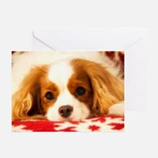 Cavalier King Charles Holiday Card (Pk of 20)