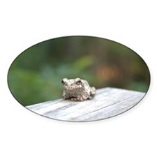 Resting Frog Decal