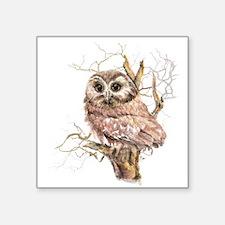 Cute Baby Saw Whet Owl Watercolor Bird Sticker