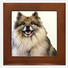 Keeshond Head Shot Framed Tile