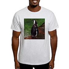 black-footed penguin Ash Grey T-Shirt