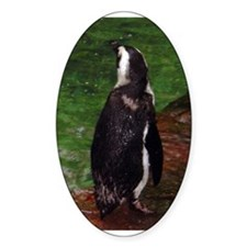 black-footed penguin Oval Decal