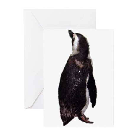 black-footed penguin Greeting Cards (Pk of 10)