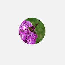 Hummingbird Clearwing Mini Button