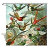 Beautiful Hummingbirds Art Shower Curtain